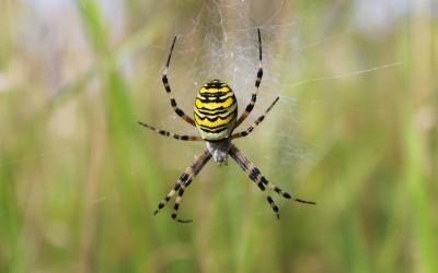 Les araignées… même pas peur !