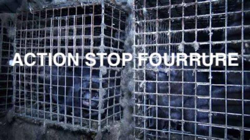 Action Stop Fourrure