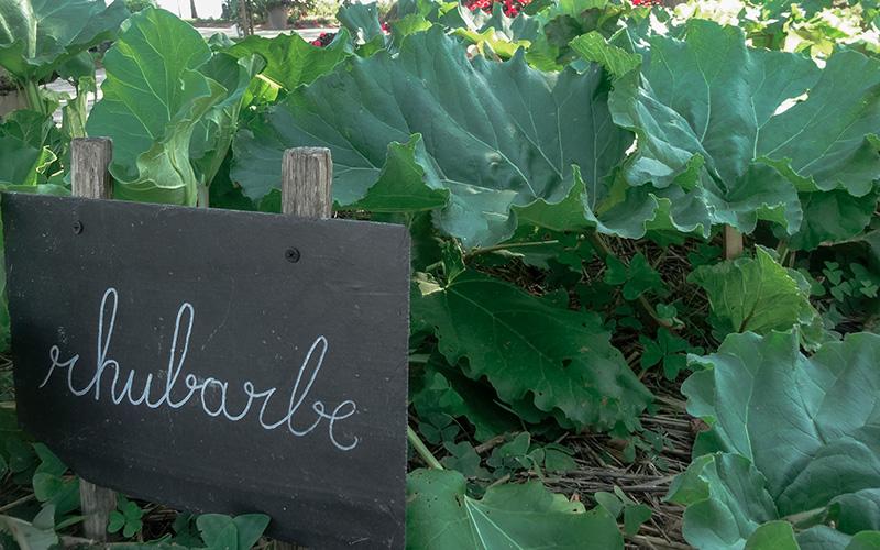 Encore un mois pour visiter le potager du Jardin des Plantes