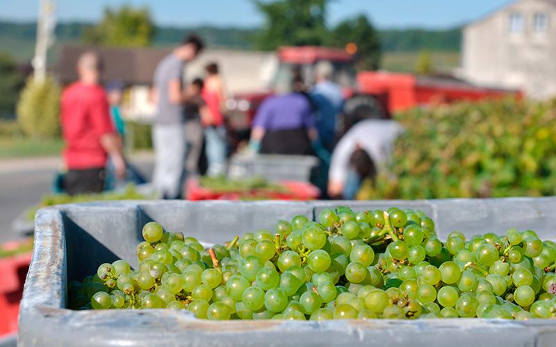 Emplois saisonniers agricoles : 3 997 postes à pourvoir en Loire-Atlantique