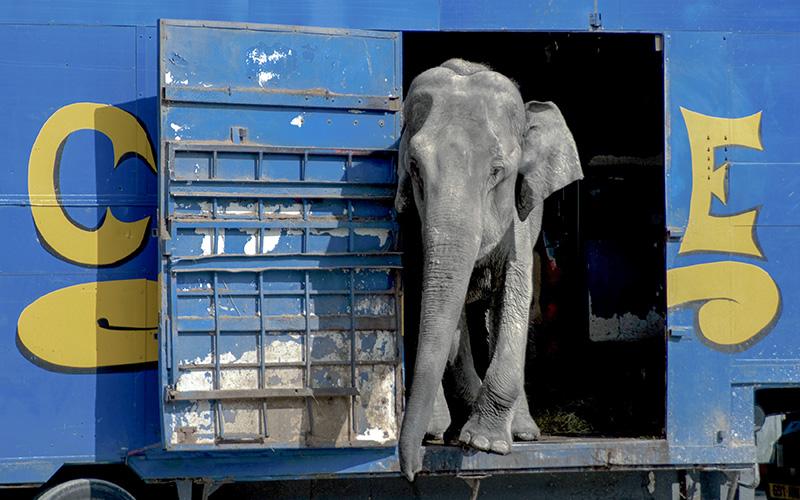 Cirque : les animaux ne font plus recette à Saint-Nazaire