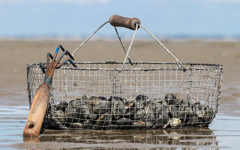 Loire-Atlantique : extension des interdictions de pêche à pied