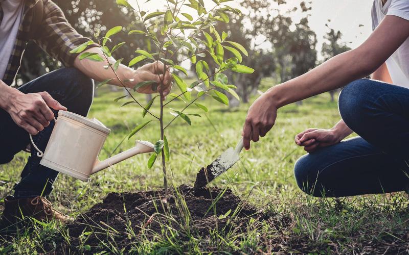 Le Parc Naturel Régional de Brière relance l'opération Un arbre, Une vie