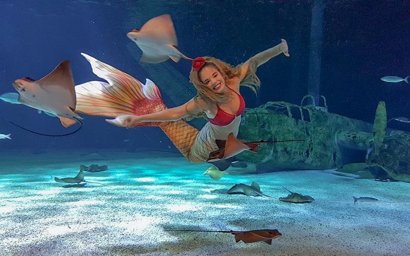 Le Croisic : un spectacle de sirène pour la réouverture de l'Océarium