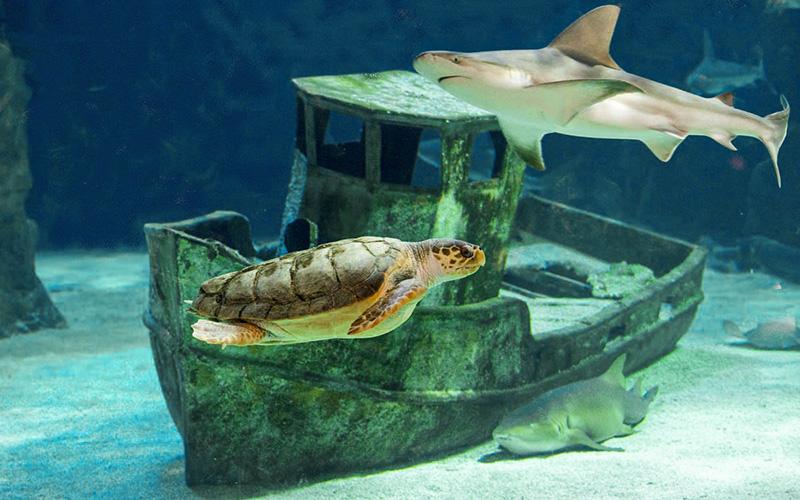 L'Océarium du Croisic rouvre ses portes jeudi 21 mai