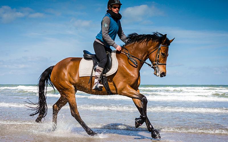 La Baule : 2021 sera l'année du cheval