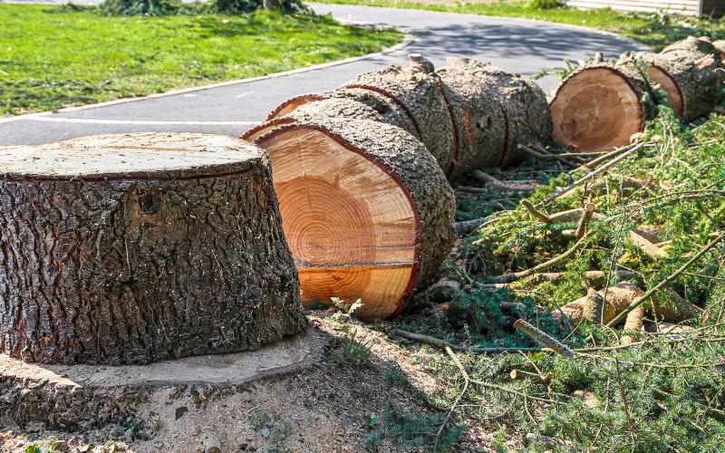 Saint-Nazaire : les promoteurs devront payer s'ils abattent des arbres