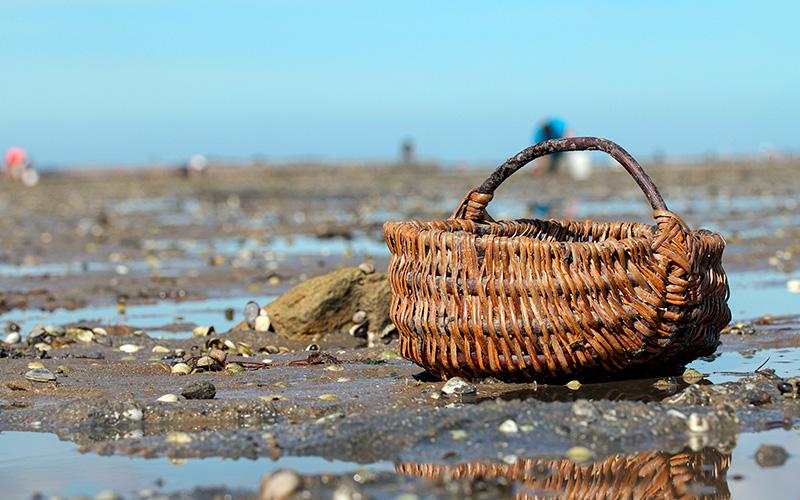 La pêche aux coquillages interdite de Pont-Mahé à Batz-sur-Mer